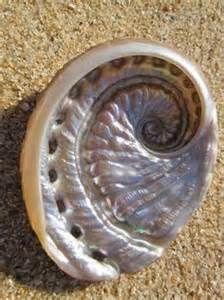 fibonacci sequence -nautilus