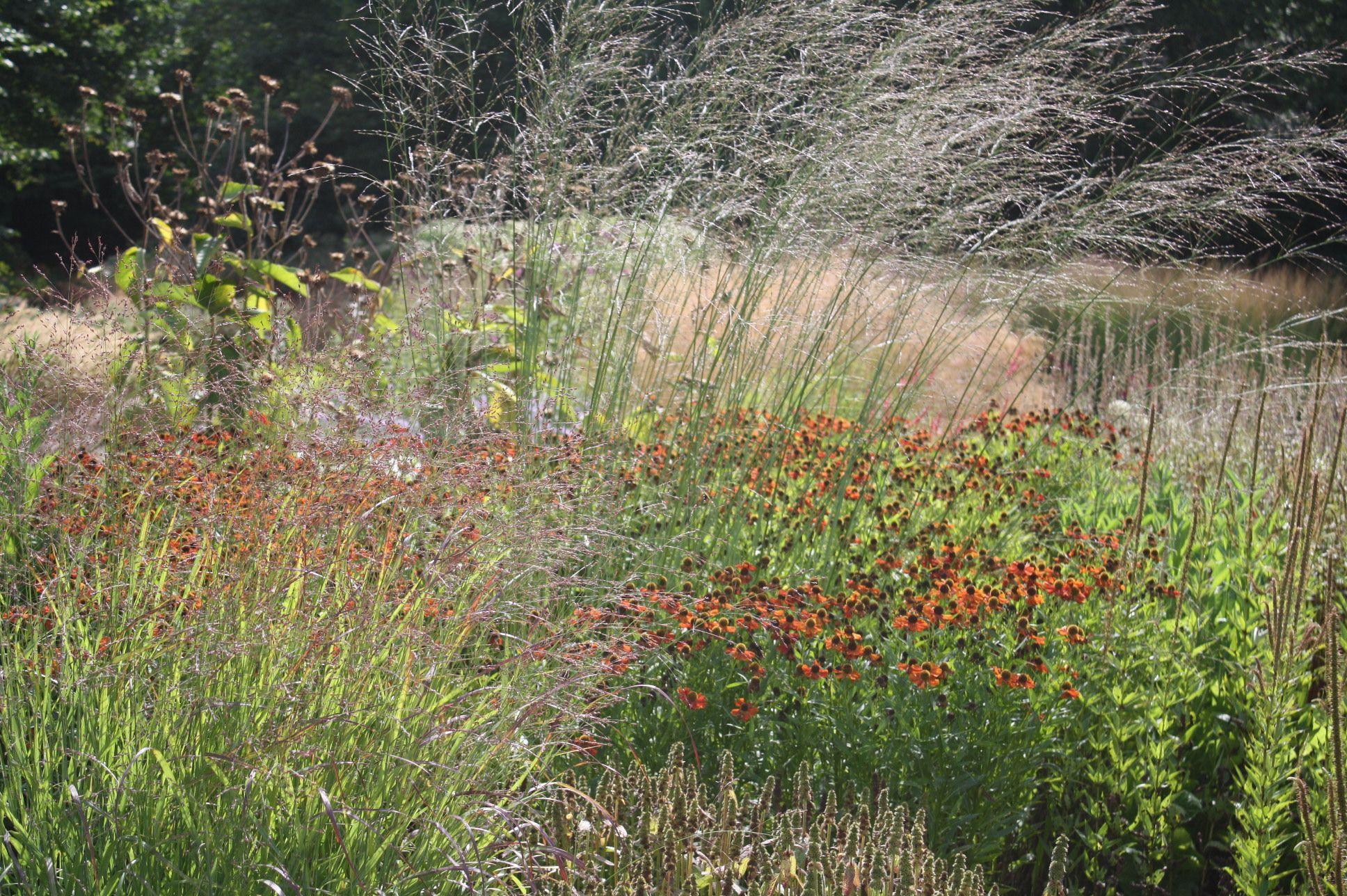 D hamm maxipark piet oudolf natur nature natur for Pflanzengestaltung garten