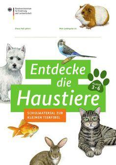 Titelseite Der Broschure Haustiere Kindergarten Vorbereitung