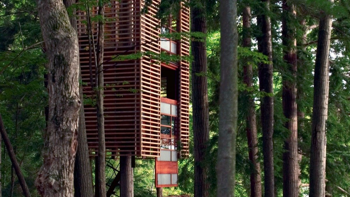 Backyard Dreaming: Inspiration for the Perfect Tree House