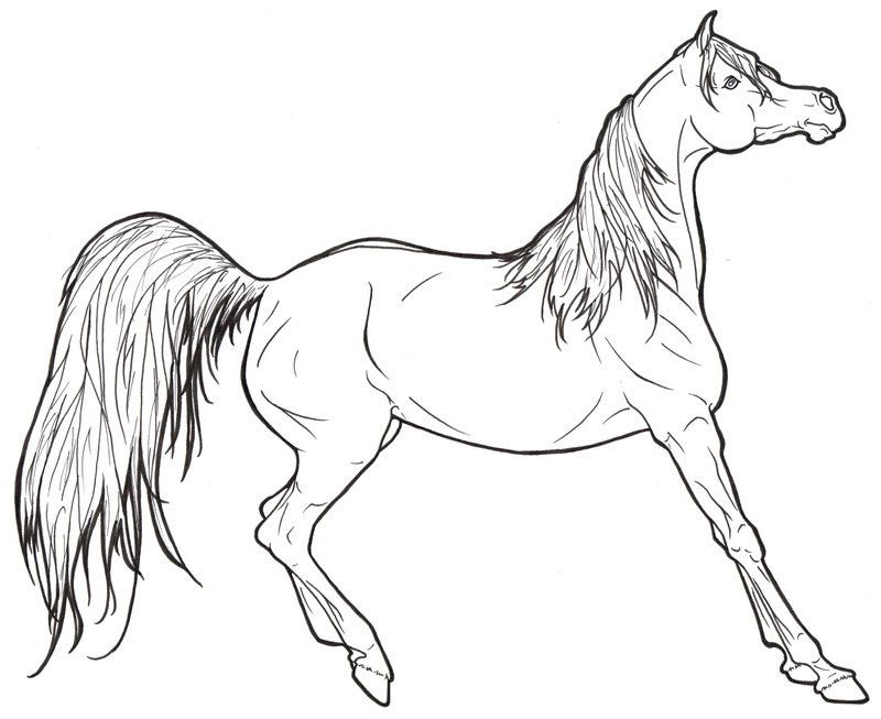 Free Horse Coloring Pages For Download http//procoloring