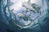 http://www.bubblews.com/news/2410659-afraid-of-sharks sharks, sharks in ocean, bullsharks