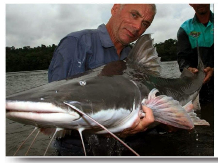 Piraiba Catfish Amazon River Monsters River Monsters Fishing Trip Fish
