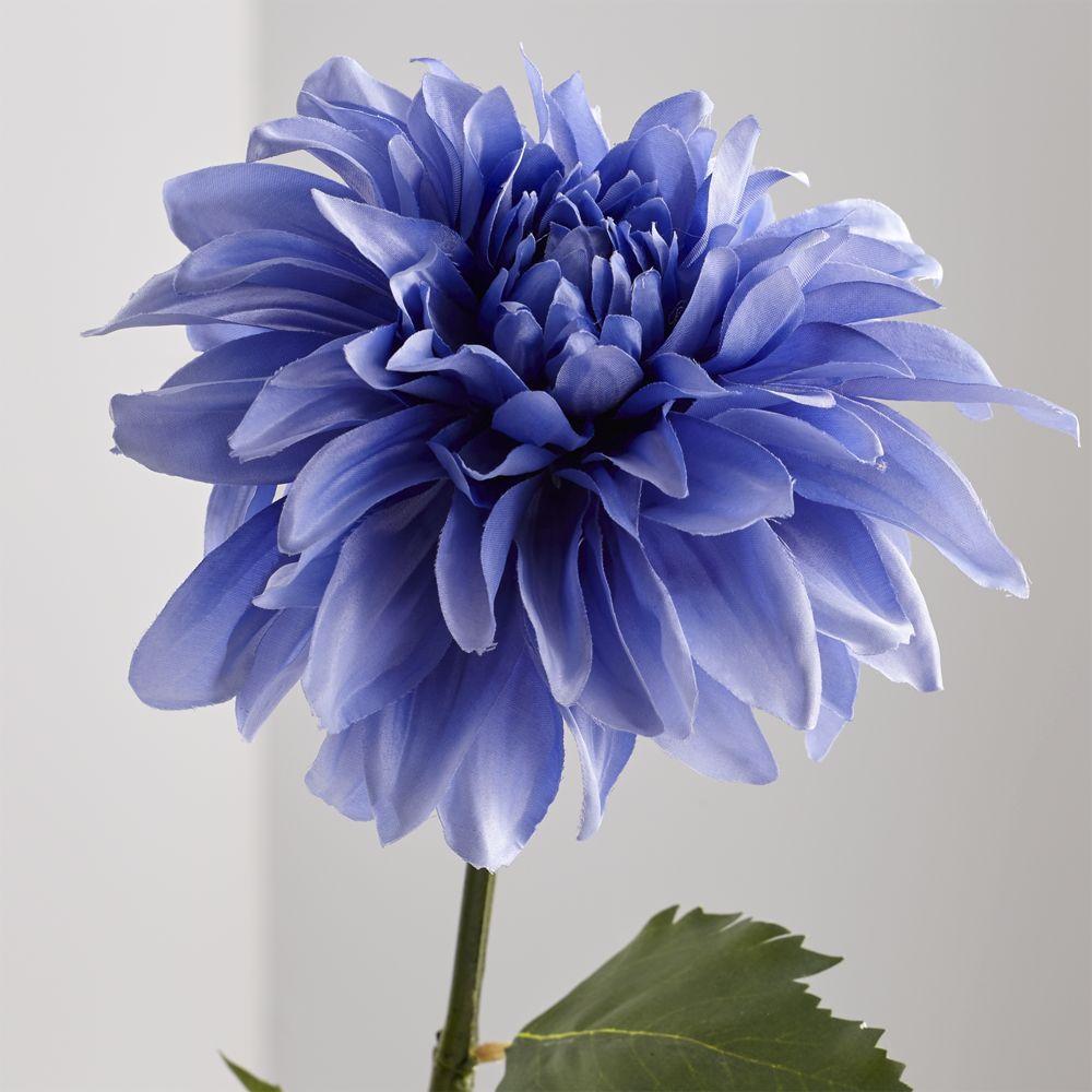 Blue Dahlia Flower Stem Beautiful Flowers Photography Dahlia Flower Beautiful Flowers Pictures