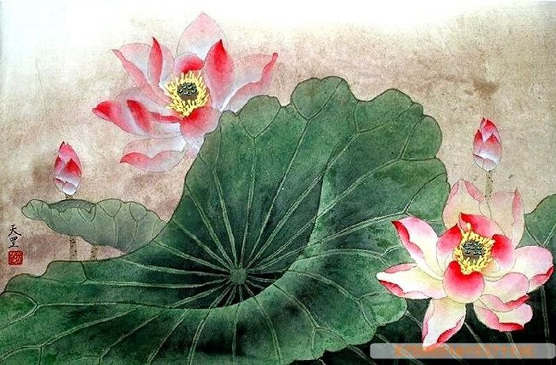 Lotus,50cm x 33cm(19〃 x 13〃),2320005-z