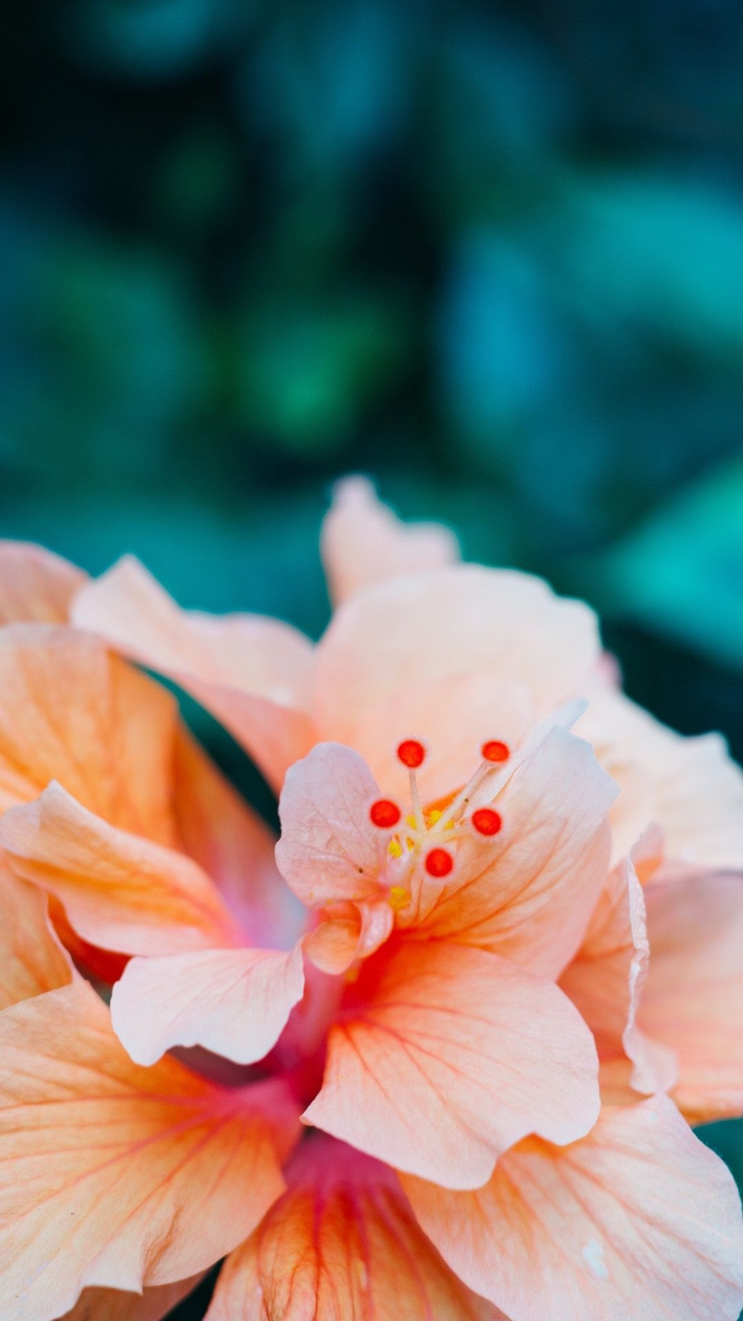 Hibiscus Flower Wallpaper For Iphone 3d Wallpapers Nature Iphone Wallpaper Flower Iphone Wallpaper Flower Wallpaper