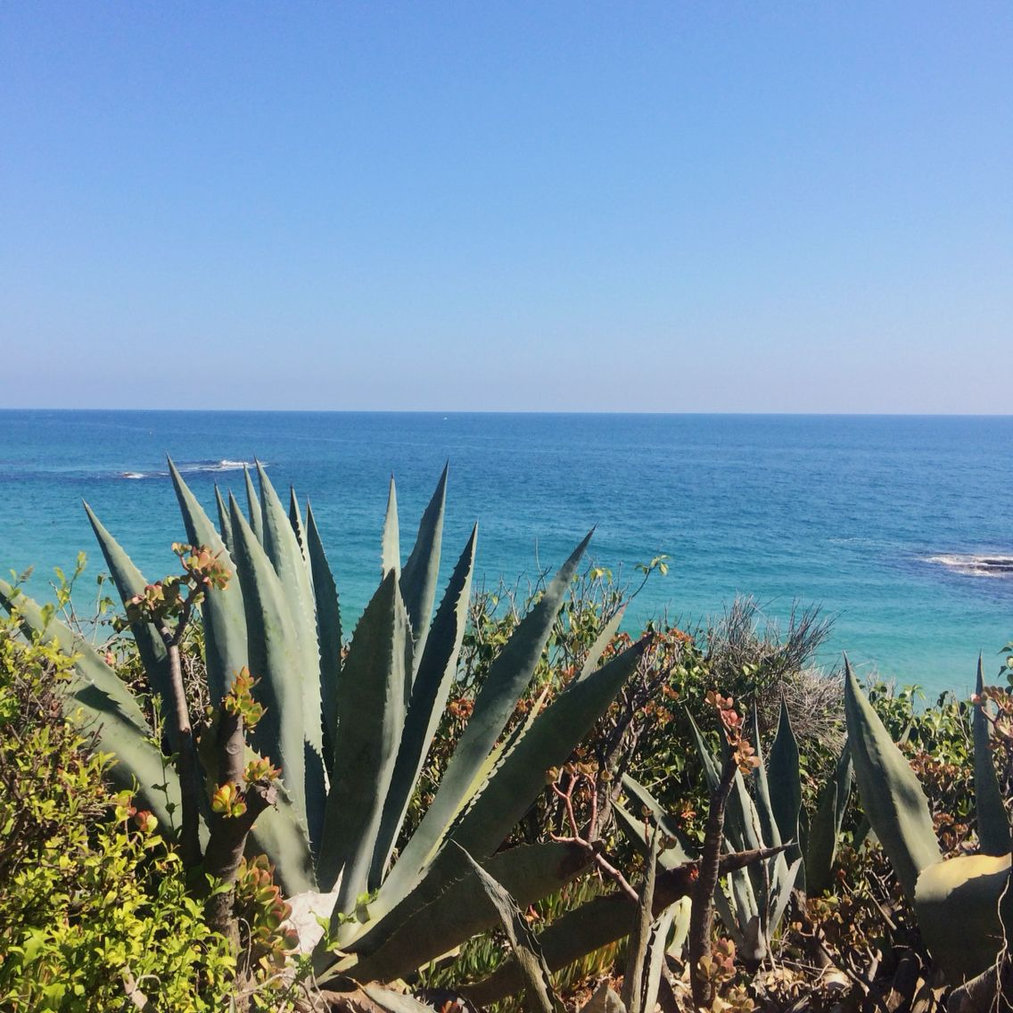 Treasure Island Laguna Beach: Treasure Island Cove In Laguna Beach