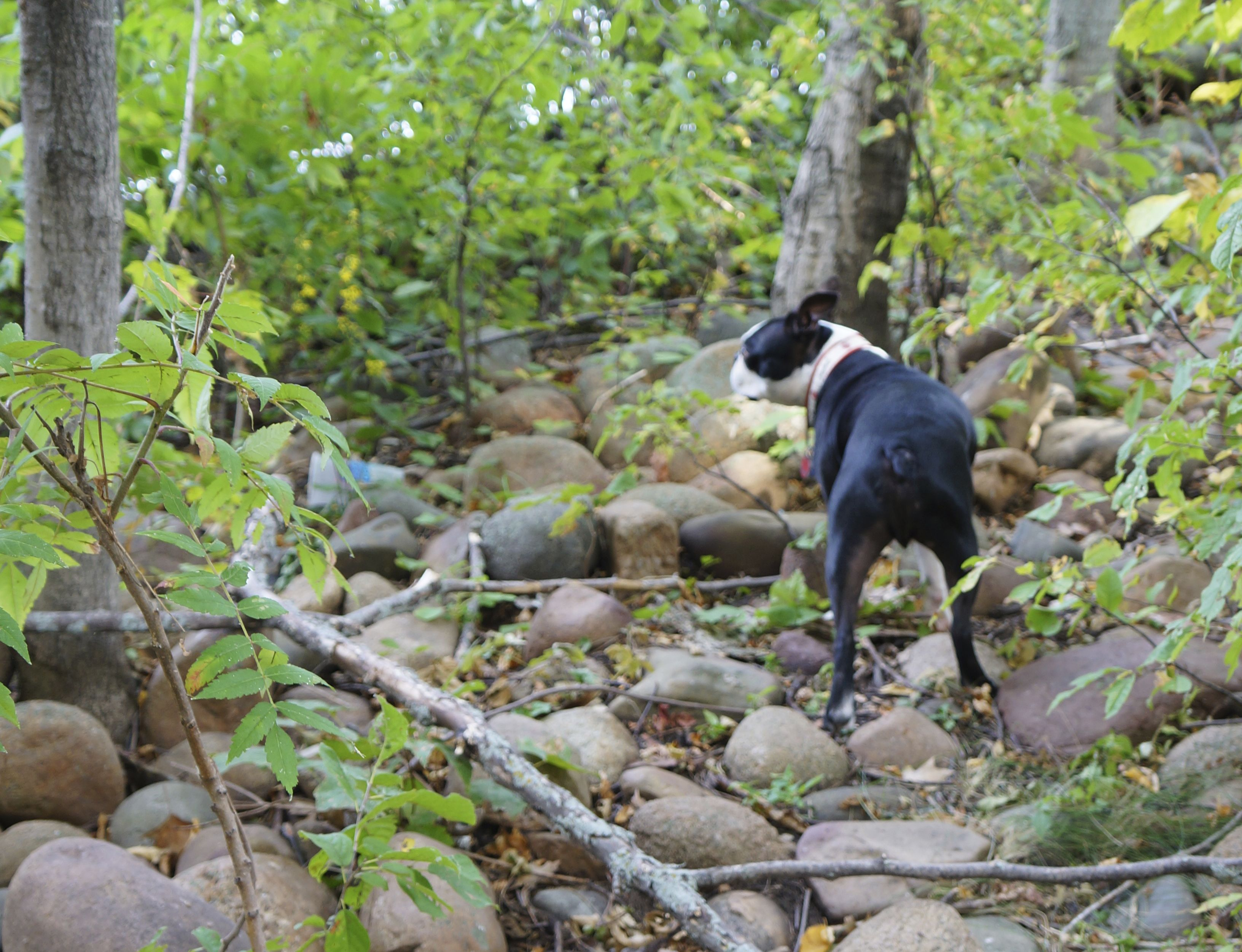 5 tips for tent camping with a dog dog insurance dogs