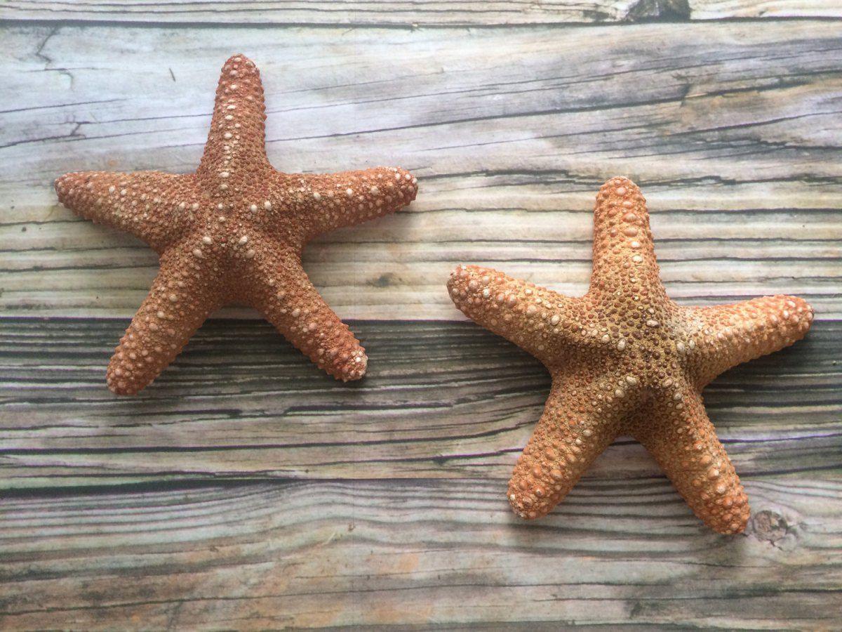 Large Starfish Wall Hangings Sea To Land Pinterest Shops