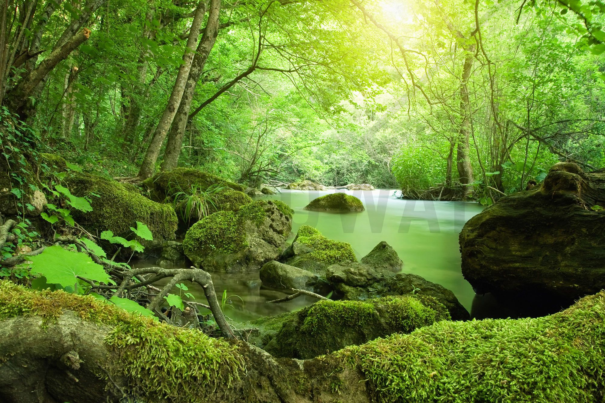 River in the Forest Wall Mural