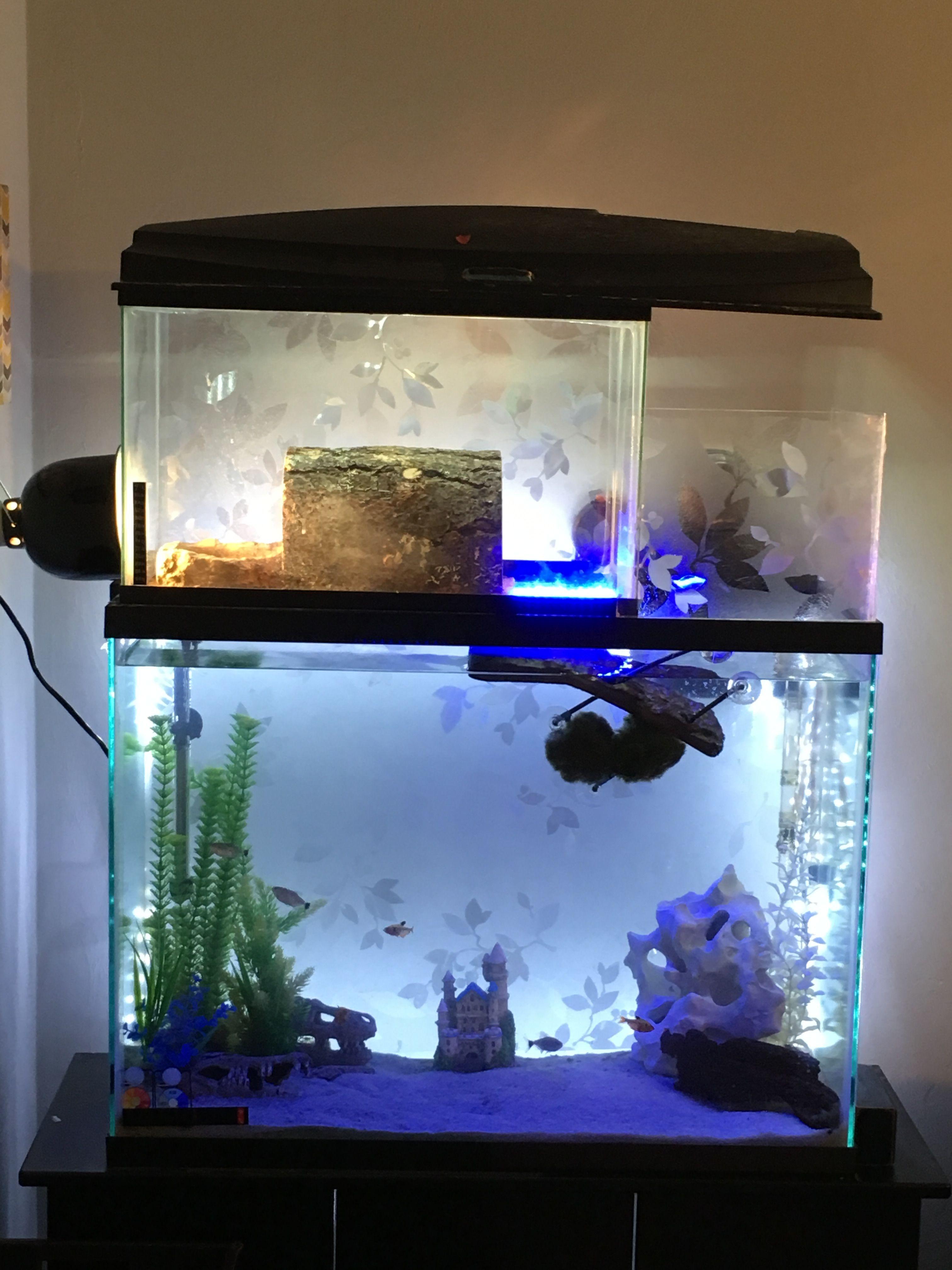Fish Plant Tank Aquarium & LCD Clock – Modern Market line