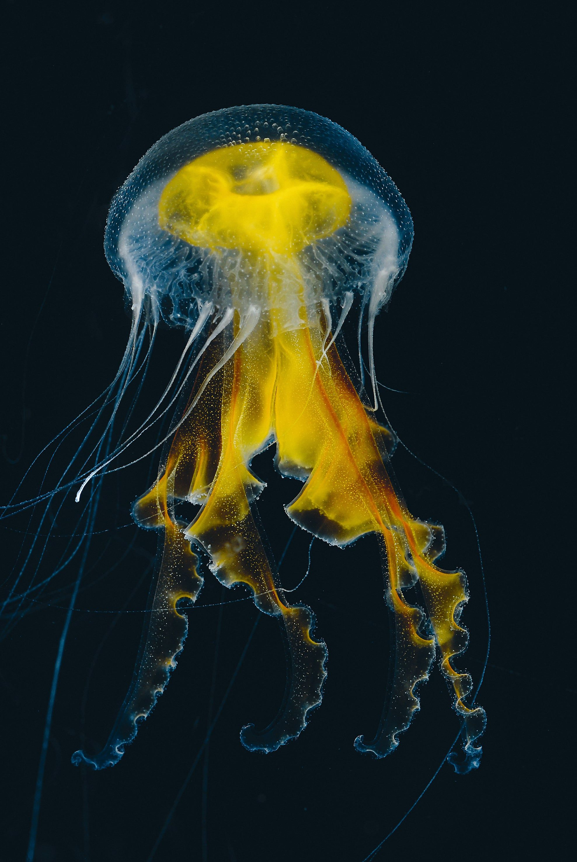 Sea nettles and medusa: a world atlas of jellyfish - in pictures