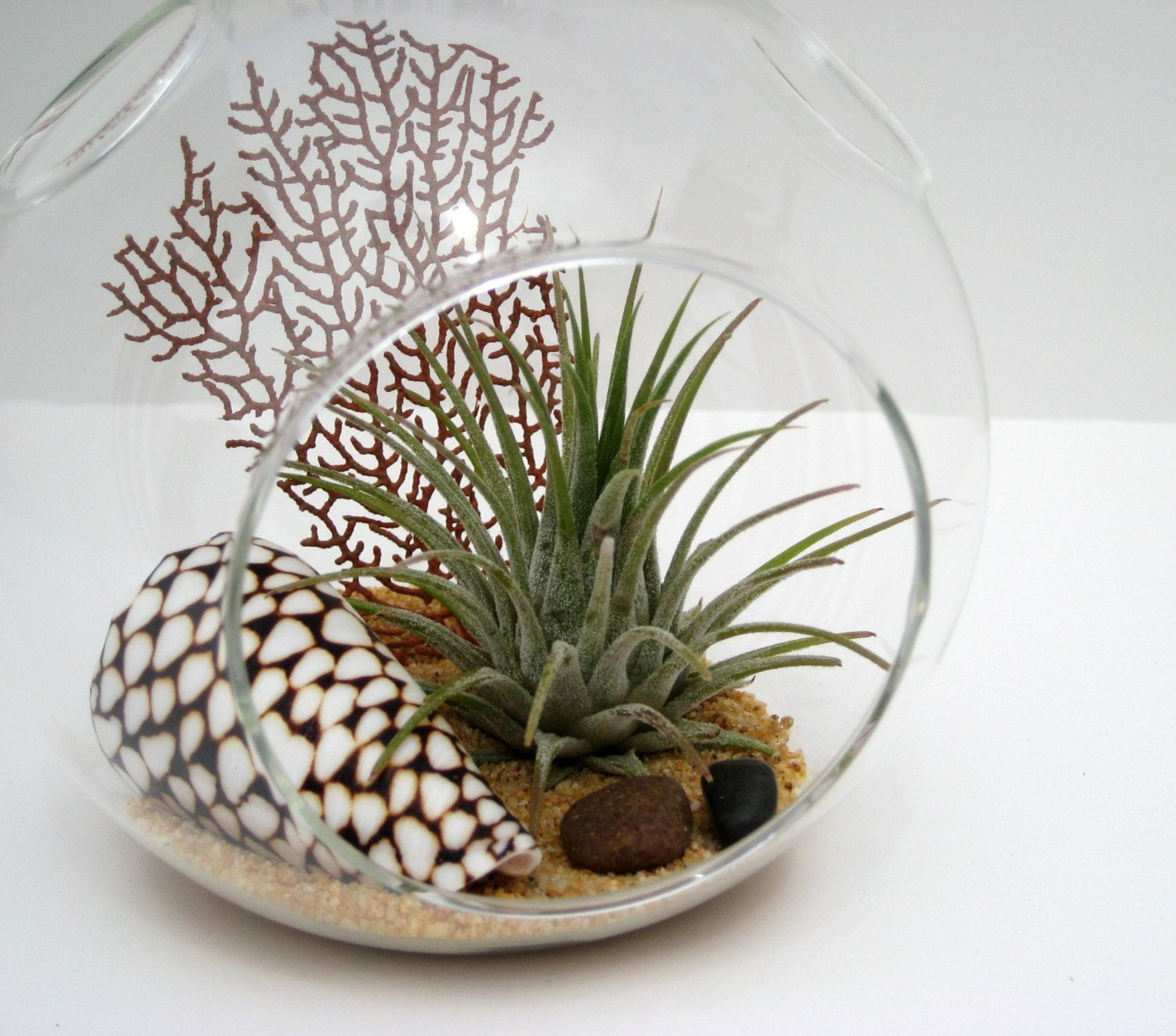 Popular items for airplant terrarium on Etsy Air plant
