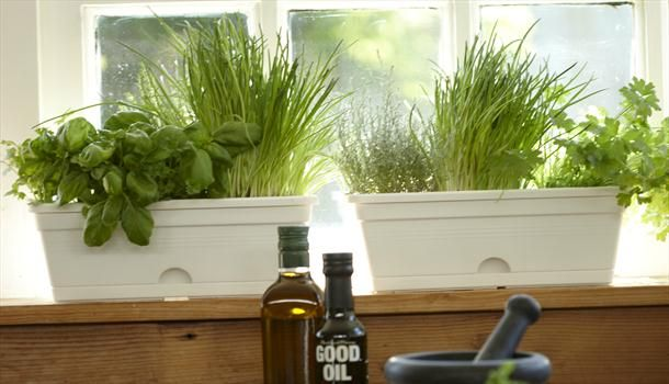 Garden Design With Grow Your Own Windowsill Herb Garden Indoor Herb Garden  With Kitchen Garden Window