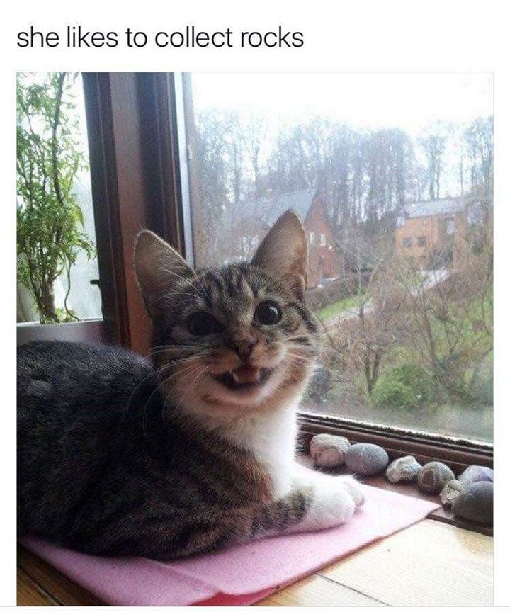 Funny Animal Pictures To Make You Laugh Out Loud Funny Animal - 20 hilarious cat photos captioned comedians