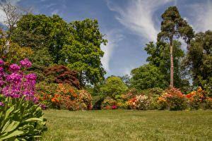 England Garten Strauch Bäume Gras Exbury Gardens Natur Hha
