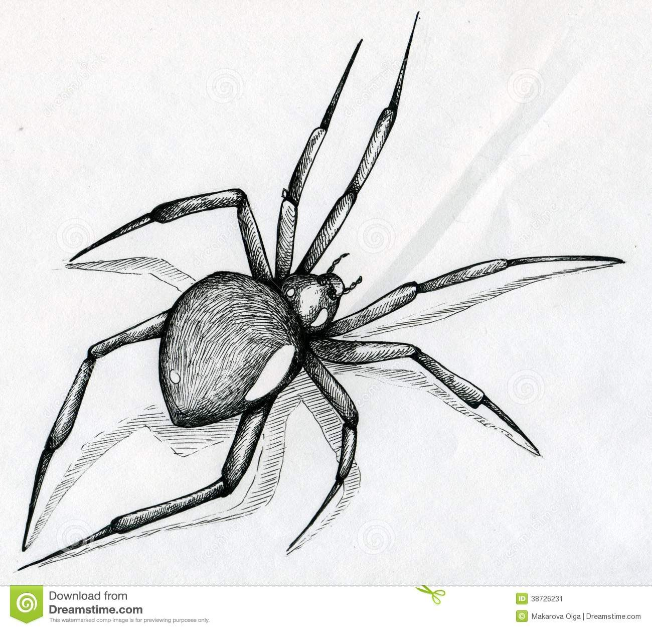 Black Widow Spider Drawing Stock Image - Image: 38726231 | 10 day ...