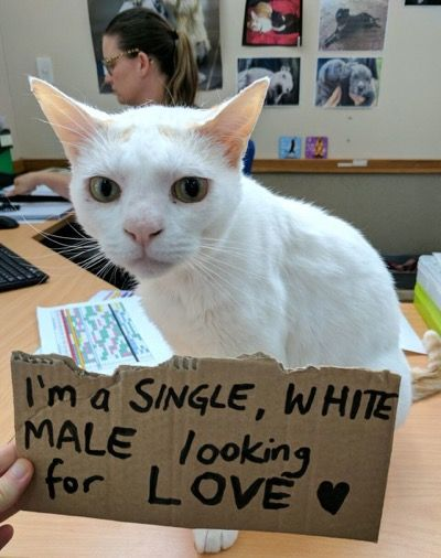 Meet The Cat Who Has Been Up For Adoption For 433 Days Animal Welfare League Cats And Kittens Cats