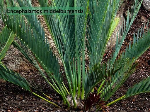 Drought Tolerant Plants for California | Articles > Best