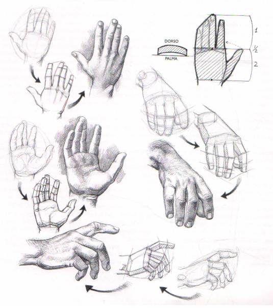 Aprender A Dibujar Manos Y Pies El Dibujante Mas