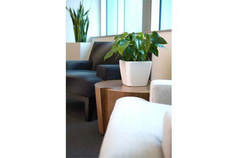 Reception Indoor Plants Displays From