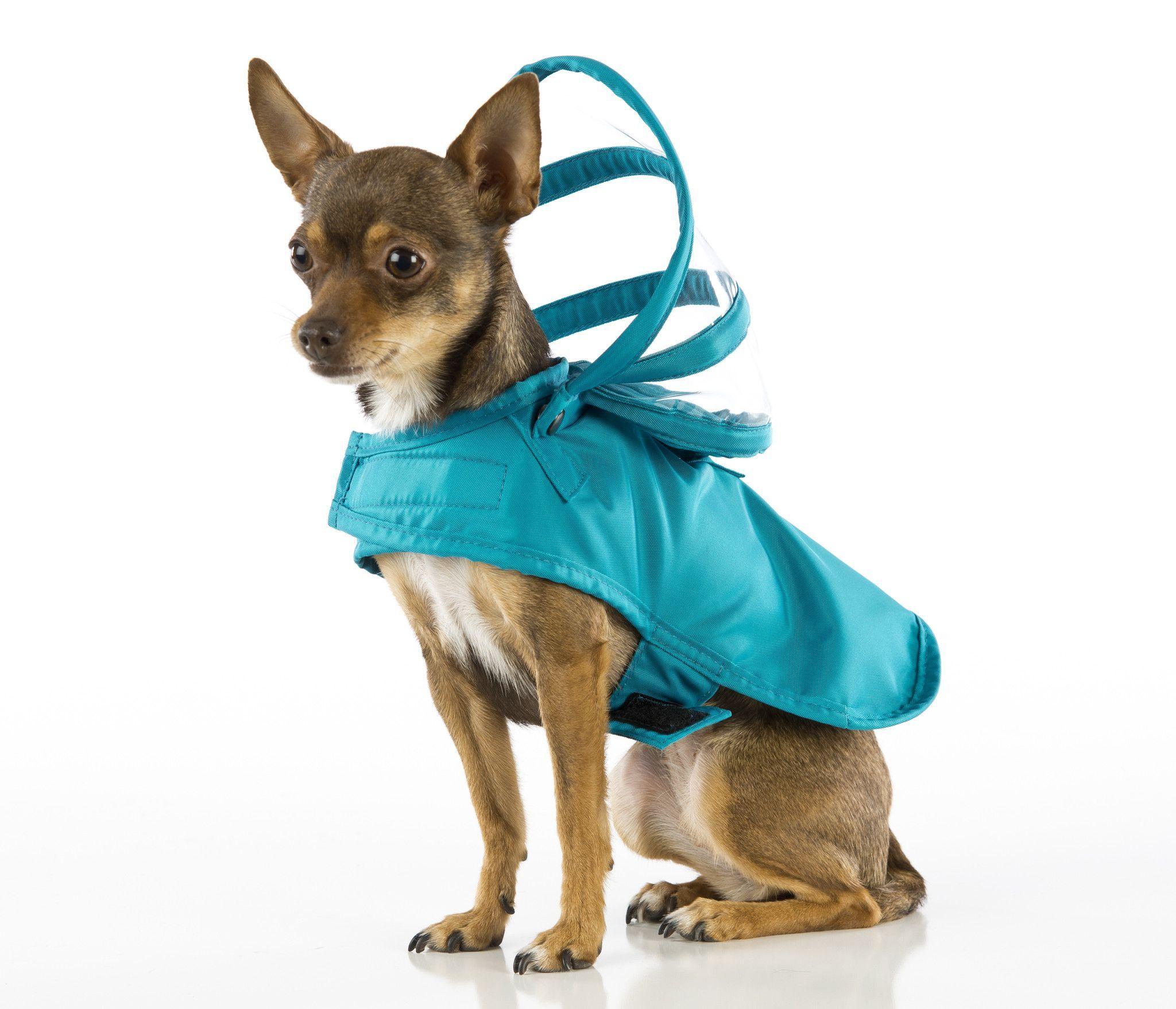 Dog Raincoat Solid Teal Blue Ropa para perros, Perros
