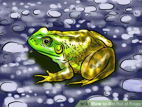 How To Get Rid Of Frogs In My Fish Pond