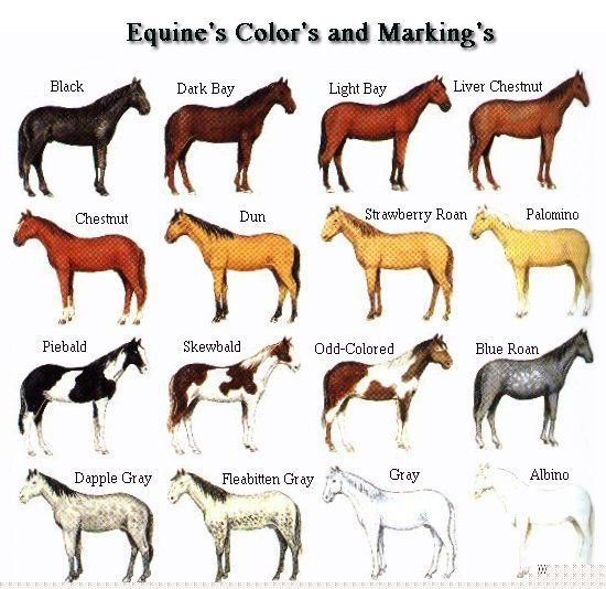 Anatomy Of A Horse Horse Color Chart Horse Coloring Horse Breeds