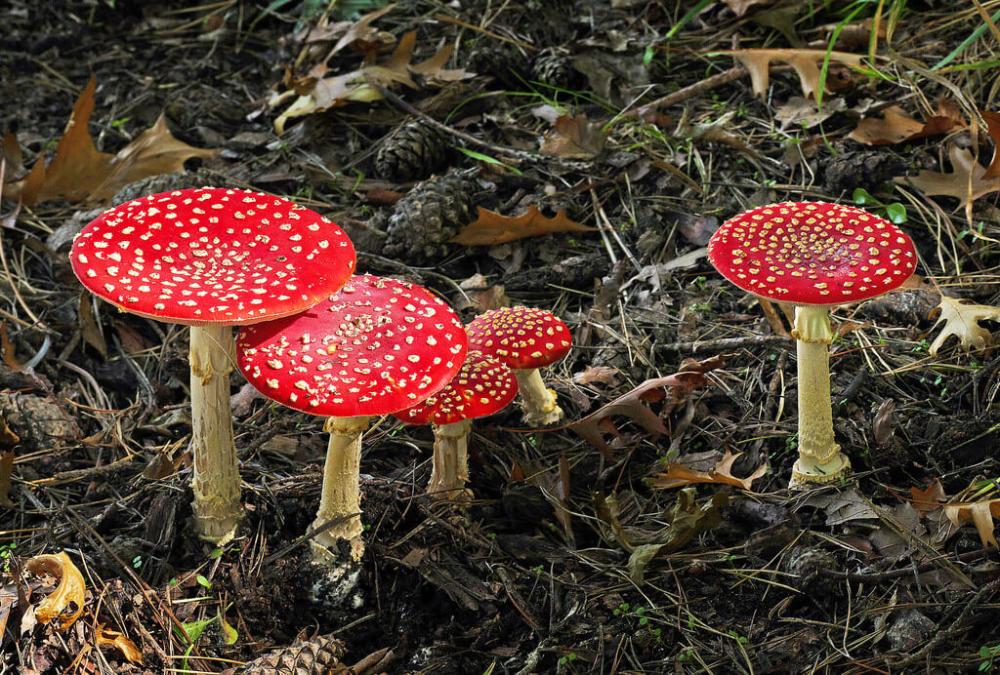 Variety | Tree mushrooms, Mushroom fungi, Stuffed mushrooms