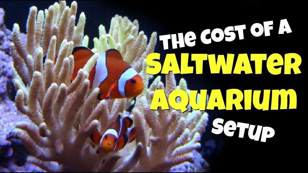 The Cost Of A Saltwater Aquarium Setup Saltwater Aquarium Saltwater Fish Tanks Saltwater Aquarium Setup