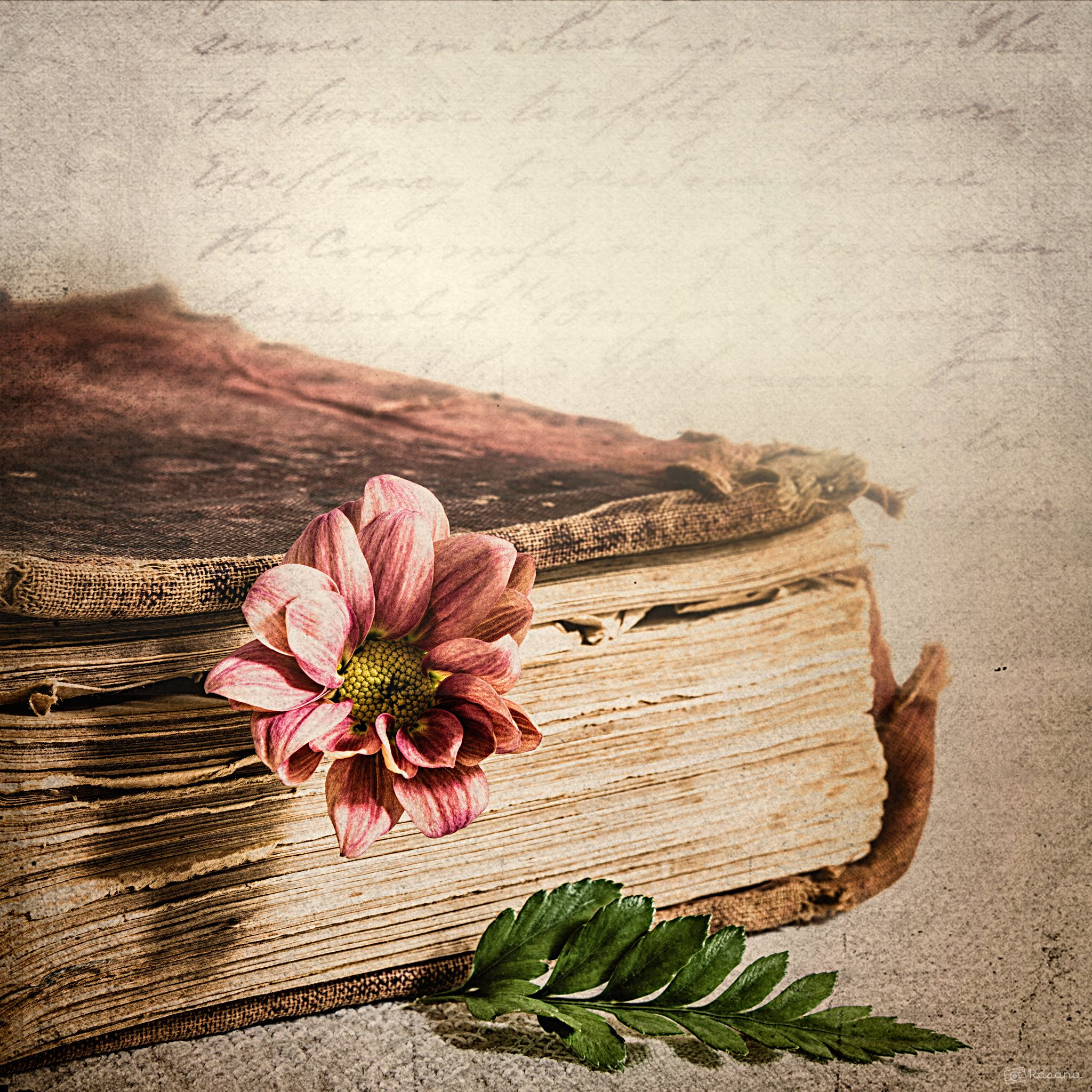The Old Book Book Flowers Old Books Book Photography
