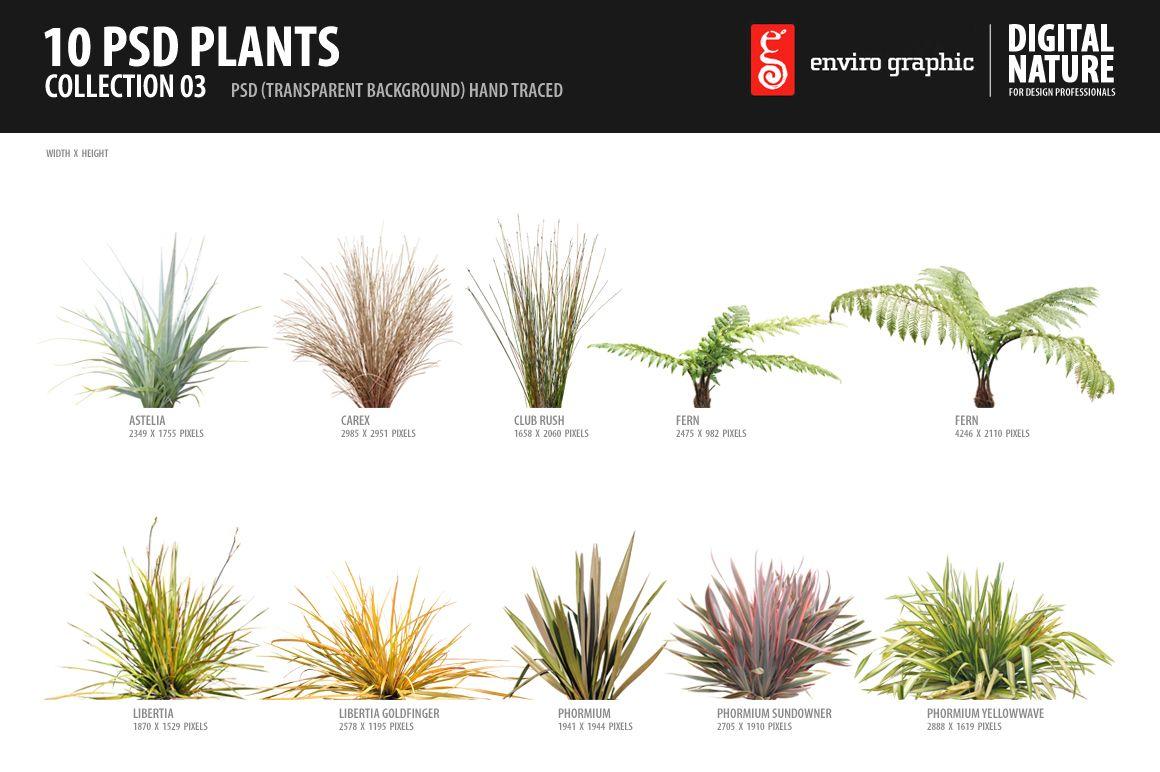 10 PSD Plants Collection 3 Plants, Landscape, Landscape