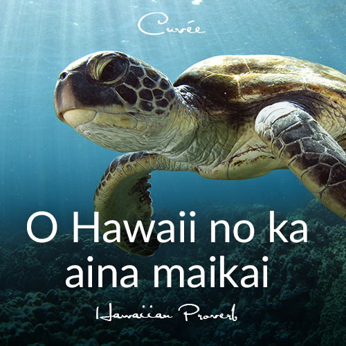 """Translated means, 'After all, Hawaii is the best land.' Book your getaway to """"the best land"""" and enjoy sun, surf, and serenity – Cuvée Style. #travelcuvee #cuveeescapes"""