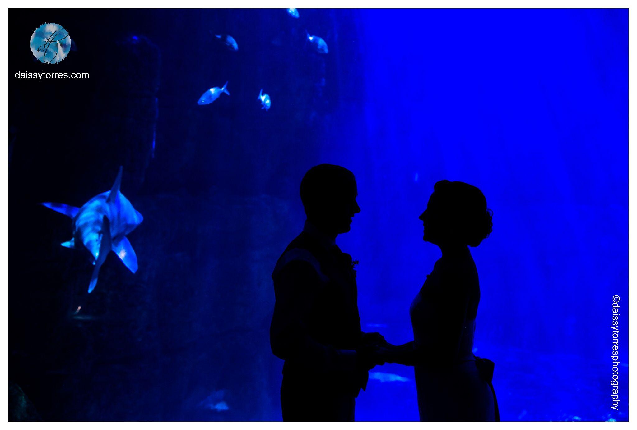 Virginia Aquarium Wedding | Shark Tank Portrait | Wedding Silhouette| Daissy Torres Photograph