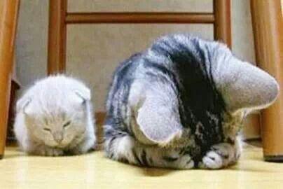 Why do you make hiding yourself? So cute?