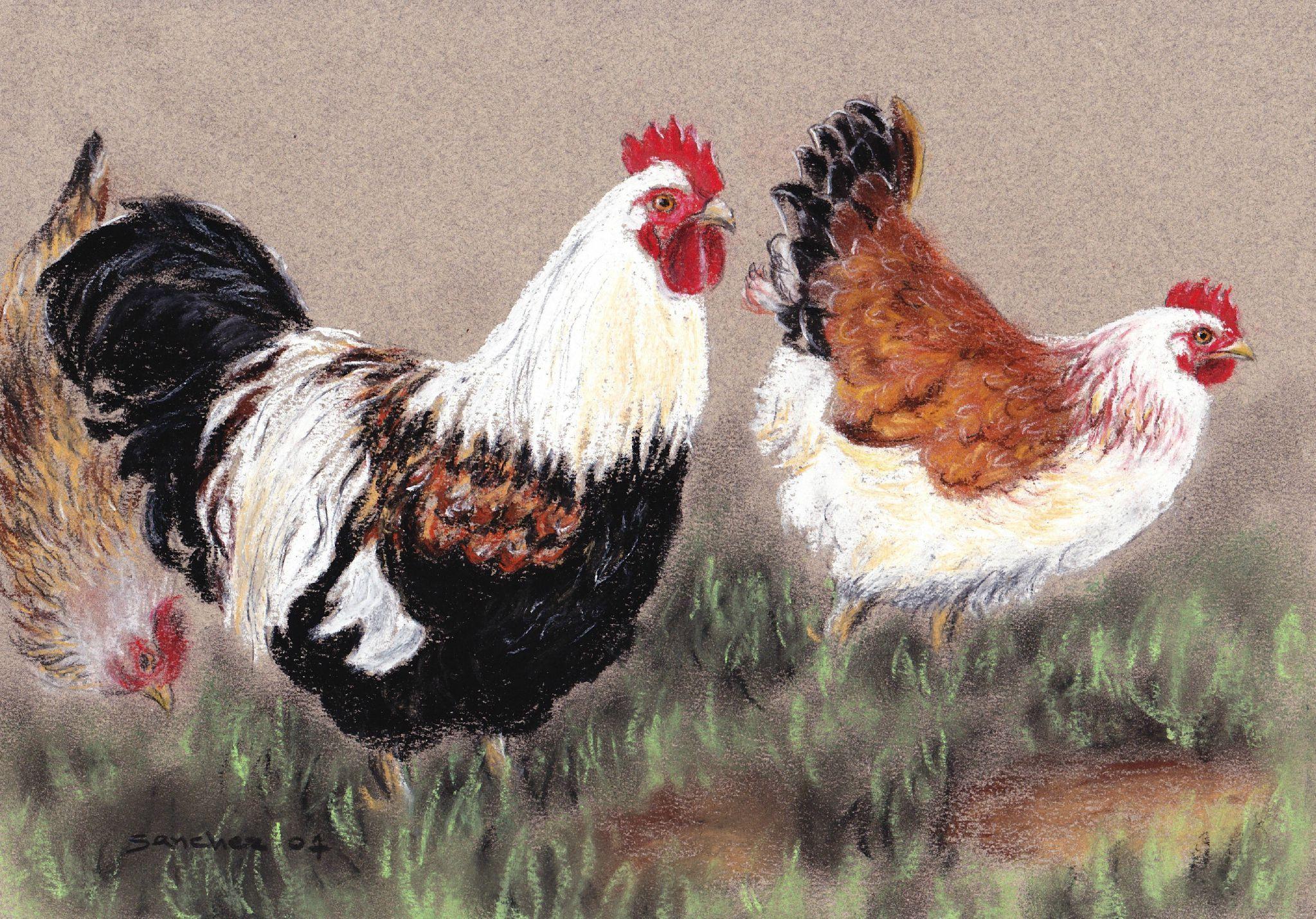 Coq Et Poule Pastel De Xavier Sanchez Peinture De Coq Art De