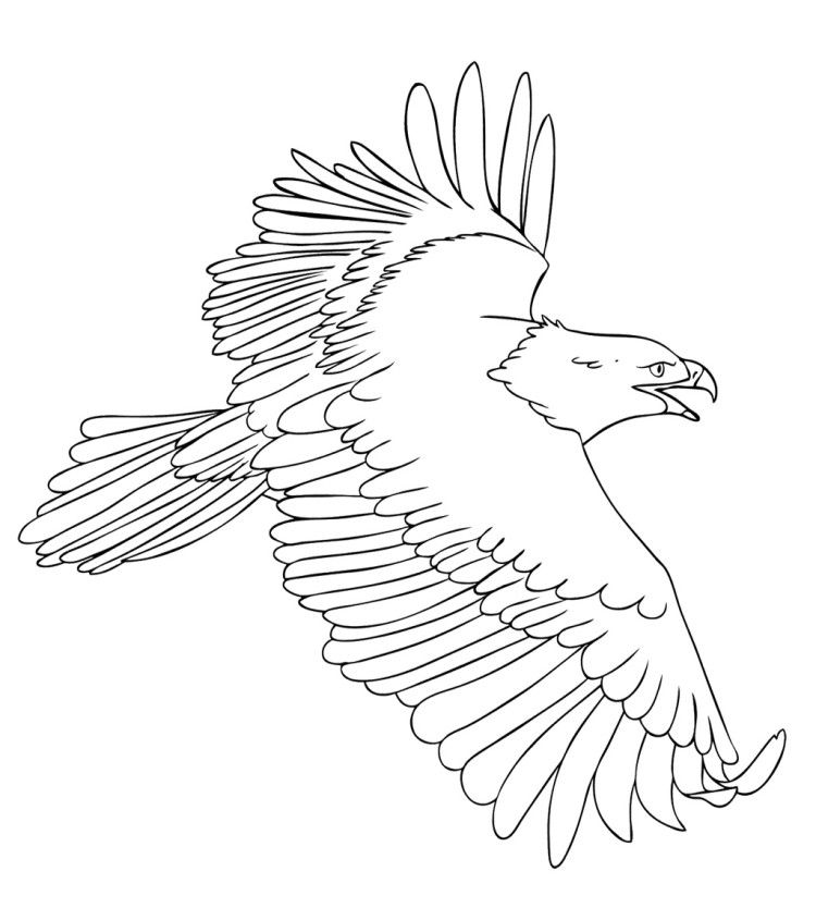 Eagle Fly Free Coloring Pages Coloring Pages Pinterest Crafts - new eagles to coloring pages
