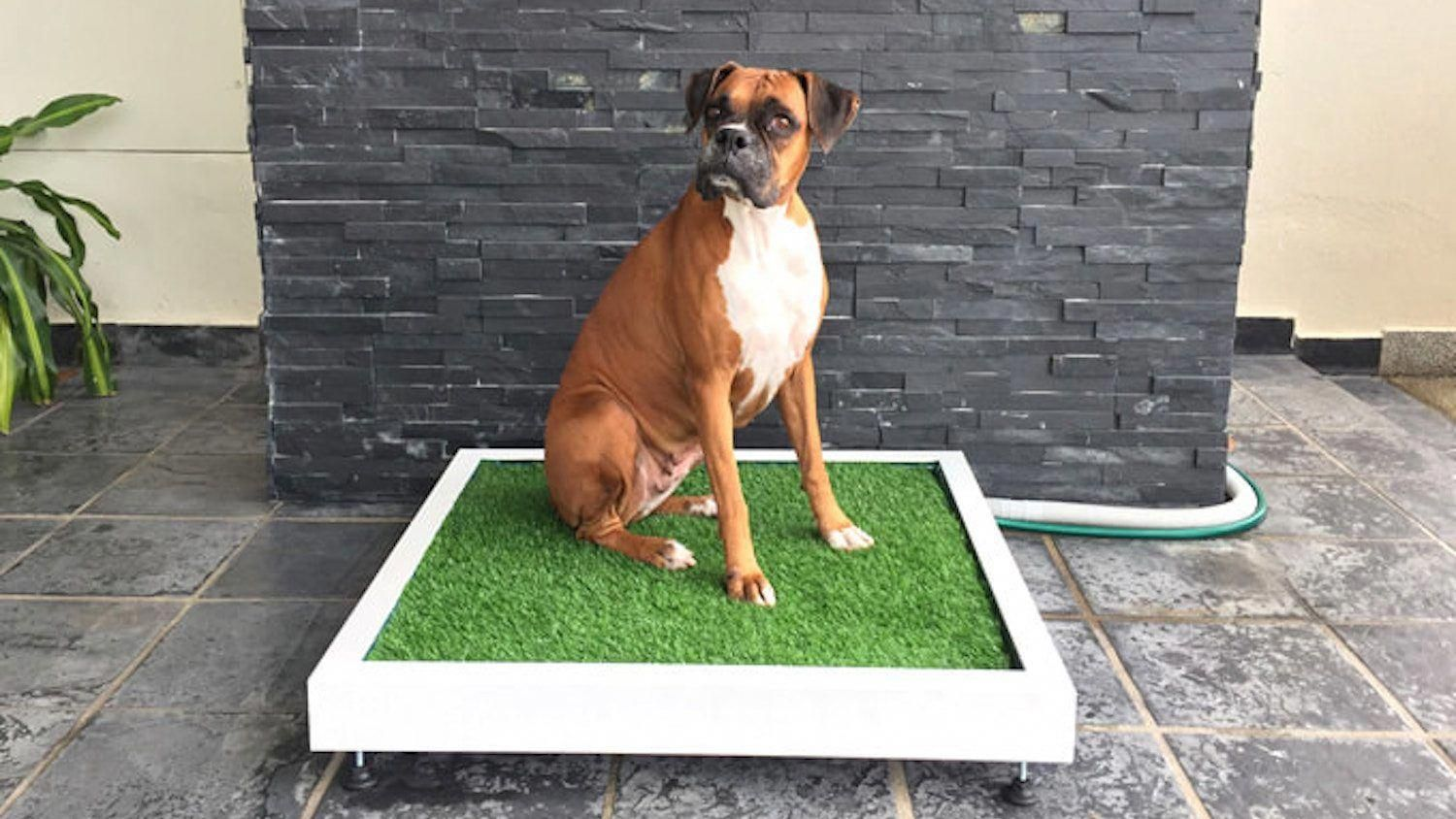 Educated Recorded Cool Dog Training Check This Out Dog Toilet Aggressive Dog Dog Training