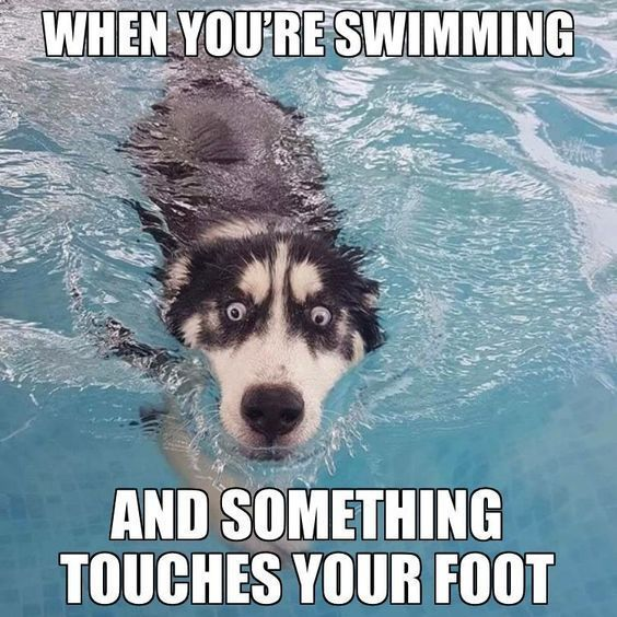 New Funny Hilarious Hilarious and Funniest Dog Memes Of The Day (50 Pics) | FallinPets Hilarious and Funniest #DogMemes Of The Day (50 Pics) 10