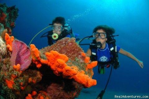 Dream jobs anyone? Careers Pinterest Marines, Marine biologist - marine biologist job description