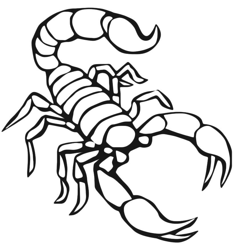 Scorpion Animal Coloring Pages Free Animals Scorpion Printable Coloring Pages For Preschool Jpg 816 881 Gambar Menggambar Katak Menggambar Gajah