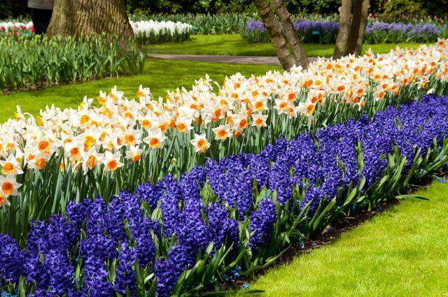 как сочетать растения на клумбе по цвету   Весенние цветы ...