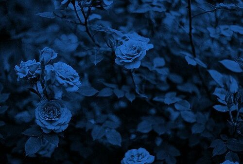 Photo Blue Aesthetic Ravenclaw Aesthetic Blue Roses