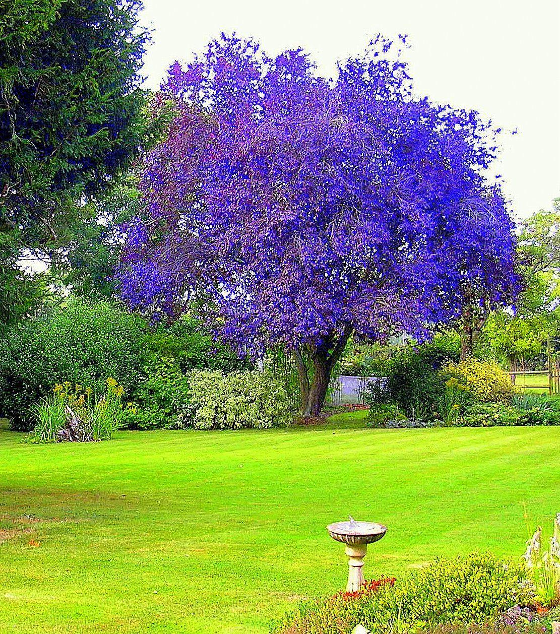 Бисер деревья фото составе