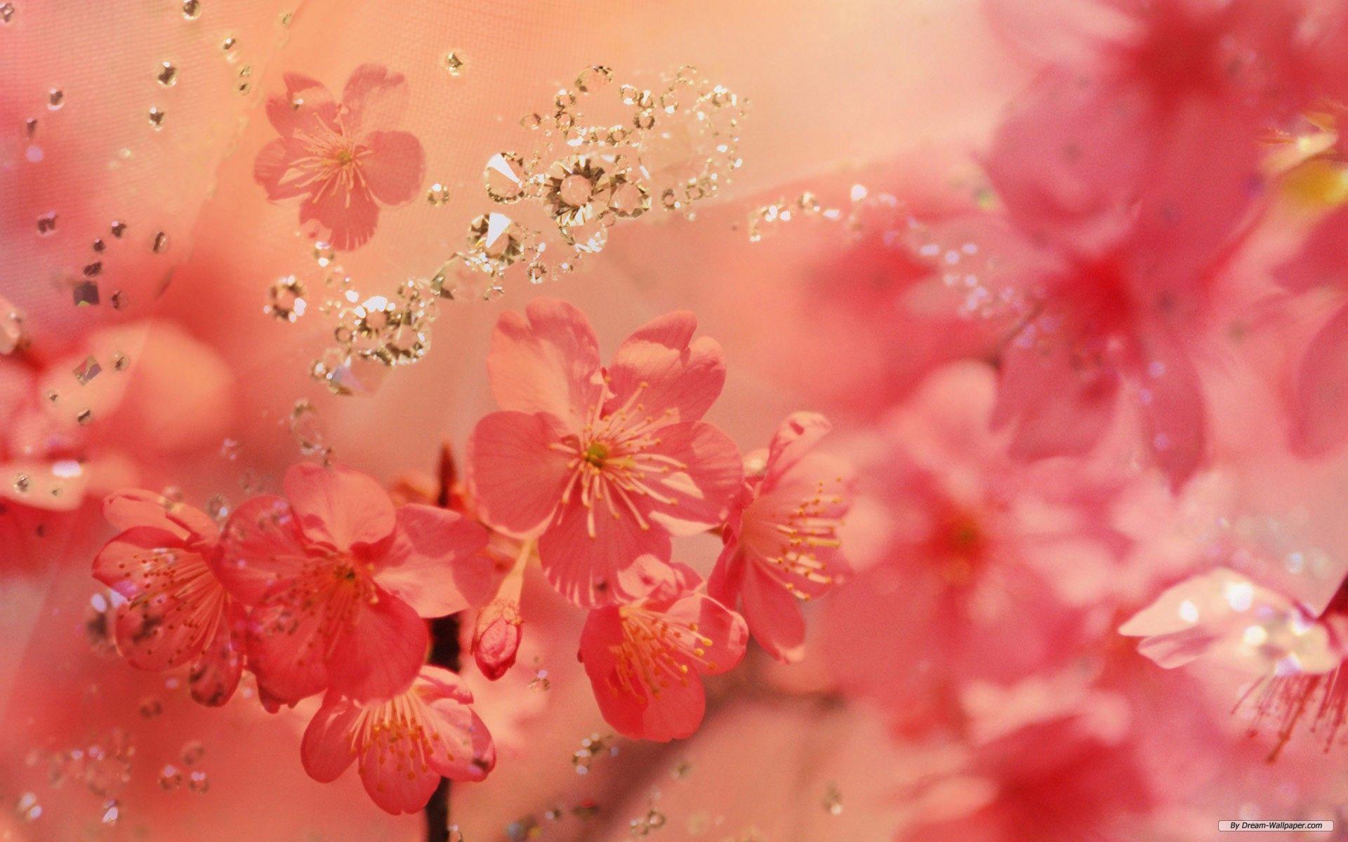 best ideas about Rose flower wallpaper on Pinterest Flower HD