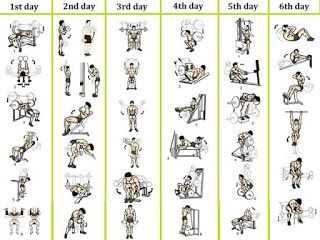 4day plan for beginner's weight training workout routine
