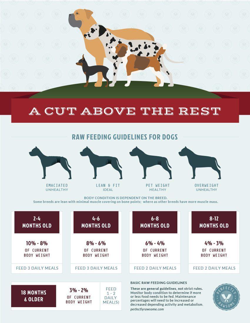 Raw Feeding Resource for Raw Feeders Raw feeding for