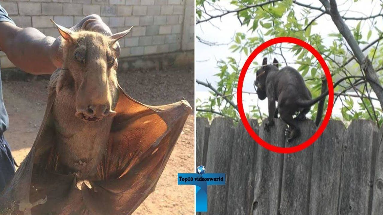 Top 10 Mysterious Creatures Caught On Camera Unbelievable