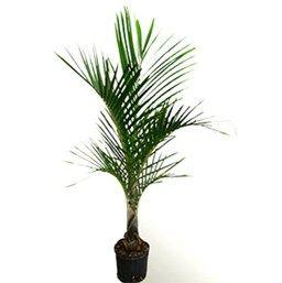 Palm Landscape Palm Landscape Tropical Plants