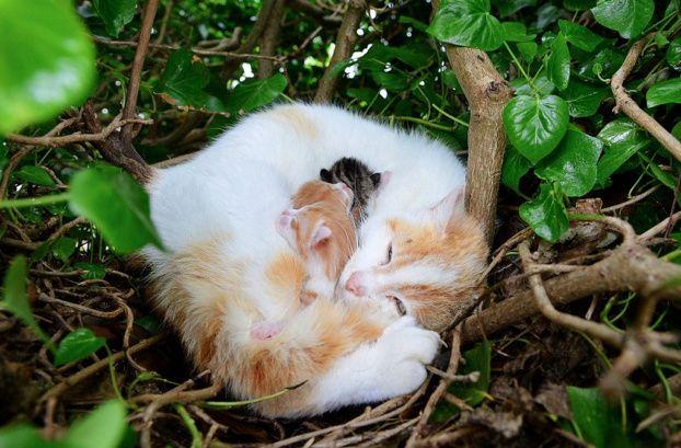 Cat Gives Birth to Kittens in a Bird's Nest !! Newborn